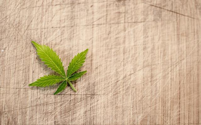 Denver marijuana employment laws